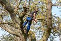Tree Surgeon using a chainsaw stock photos