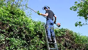Tree Surgeon using a hedge trimmer.