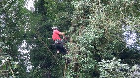 Tree surgeon at work in a tall tree.