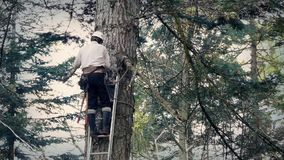 Tree Surgeon Working Up Ladder. Man up ladder sawing off branch of tree stock video