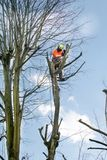 Tree surgeons climbing with ropes and cutting trees stock photos
