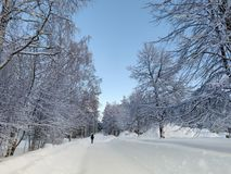Tree surrounded empty street snowscape under the bluesky with scenic panoromic beauty stock photos