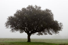 Tree surrounded by fog Stock Photos