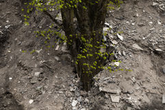 Tree surrounded by garbage Royalty Free Stock Photography