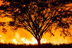 A tree surrounded by an intense fire. Stock Photography
