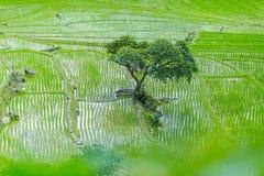 Rice terrace and mountain at Pa Bong Piang near Inthanon National Park and Mae Chaem, Chiangmai, Thailand. Royalty Free Stock Photo