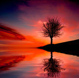 Tree on susnet. Leafless tree near lake on sunset background sky Royalty Free Stock Photos