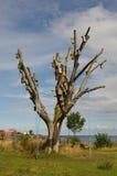 Tree in Svaneke. Stock Images