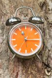Tree with swag clocks on tree background Royalty Free Stock Image