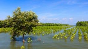 The tree in swamp Stock Photo