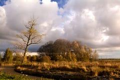 Tree on swamp in autumn Stock Photos