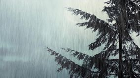 Tree Sways In Wind And Rain stock video footage