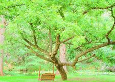 Tree swing. A beautiful view from the tree swing. This shade tree provides a nice cool shaded place to set and watch the water royalty free stock image