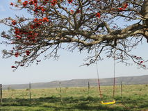 Tree and swing with fence Stock Image