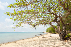 Tree and swing at seaside of island in thailand Stock Image