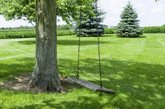 Tree Swing in the Shade Stock Photography
