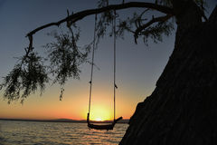 Tree swing and sunrise time Stock Image
