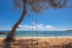 Tree swing on a tropical beach Royalty Free Stock Photos