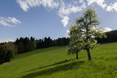 Tree, Switzerland. Swiss early spring panorama, Switzerland Royalty Free Stock Photos