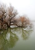 Tree in swollen waters. Tree in swollen Danube river waters in winter, reflection Stock Photo