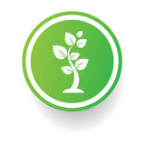 Tree symbol,Button on white background Royalty Free Stock Photo