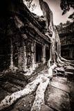 Tree of Ta Prohm, Angkor Wat Stock Photography