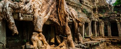 Tree at Ta Prohm. In Angkor Wat Stock Photo