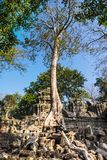 Tree at Ta Prohm, Cambodia stock photo