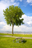 Tree and table Royalty Free Stock Images