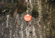 Tree Tag Royalty Free Stock Images