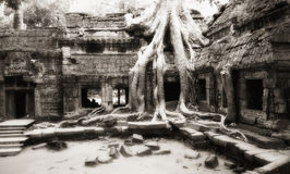 Tree taken possession of Ta Prohm temple walls Stock Photography