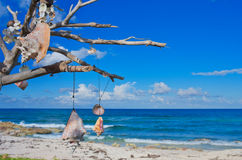Tree with talismans on the Caribbean coast. Stock Images