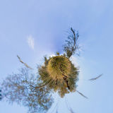 The tree in the tall green grass in the fall. Stereographic pano Stock Photo