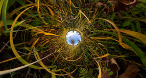 The tree in the tall green grass in the fall. Stereographic pano Stock Images