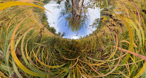 The tree in the tall green grass in the fall. Stereographic pano Stock Photography