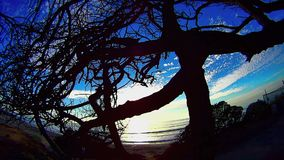 Tree In A Tangle 7 Ponto Beach Carlsbad California stock footage