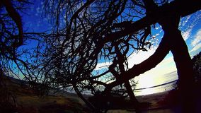 Tree In A Tangle 8 Ponto Beach Carlsbad California. Tree In A Tangle 8 Ponto Beach Sunset Carlsbad California – North County San Diego California stock video footage