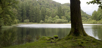 Tree and tarn Royalty Free Stock Images