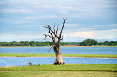 Tree at Taung Tha Man lake at U-bein bridge with a bicycle and two men resting Royalty Free Stock Images
