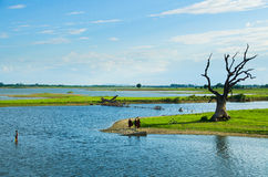 Tree at Taung Tha Man lake at U-bein bridge with three monks Royalty Free Stock Image