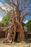Tree on a temple entrance Stock Images