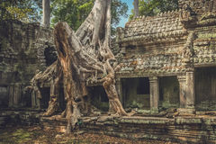 Tree on a temple wall Stock Photography