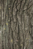 Tree texture Royalty Free Stock Images