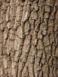 Tree texture Stock Image