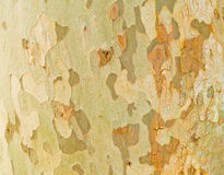 Tree texture. Organic background - texture of a tree Stock Photo