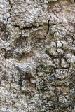 Tree Texture Background Royalty Free Stock Image
