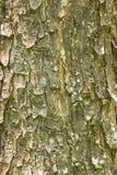 Tree Texture Background Stock Image