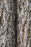 Tree texture (bark) Royalty Free Stock Photos