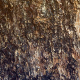 Tree texture Stock Images
