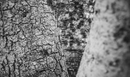 Tree texture in black and white royalty free stock photo